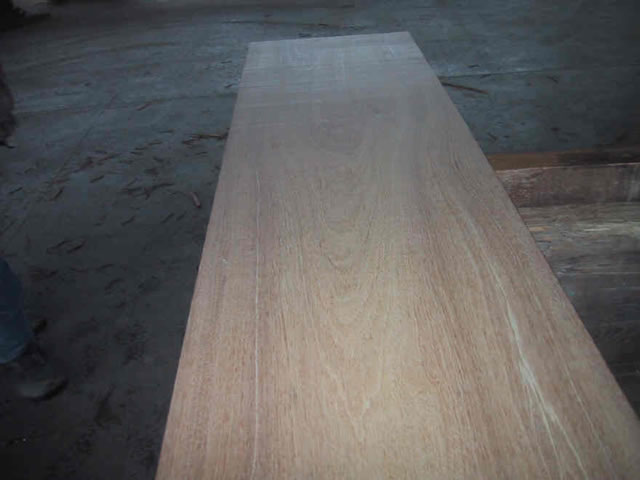 Indonesian Red Mahogany From Monsoon Blowdown